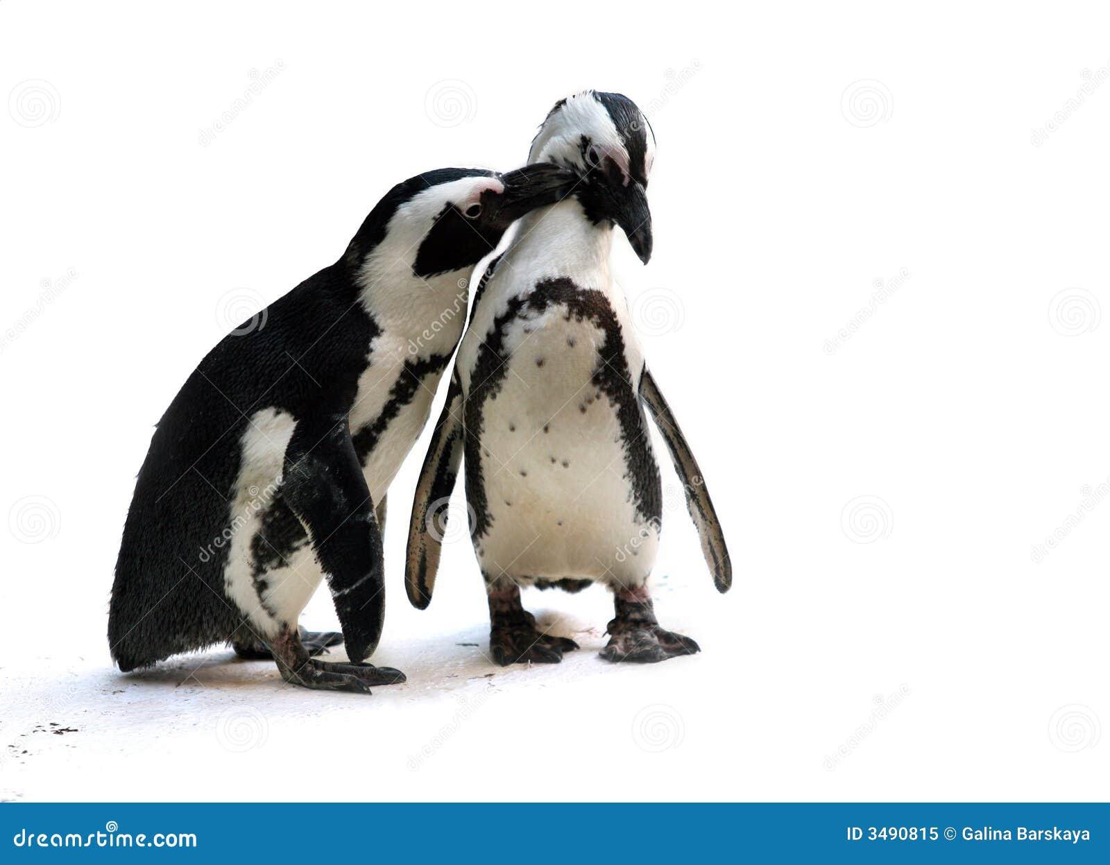 Pares do pinguim