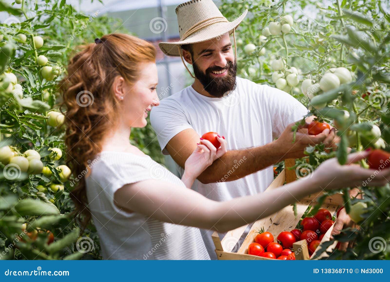 Pares jovenes de los granjeros que trabajan en invernadero