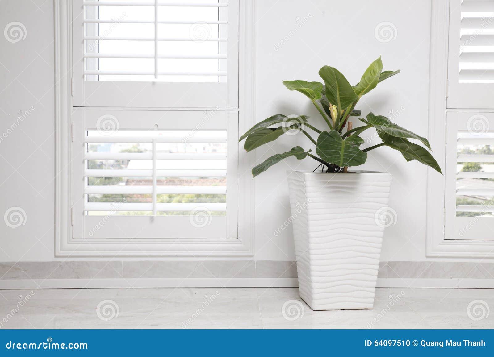 Parete Verde Ufficio : Parete bianca dellufficio finestra ed albero verde fotografia