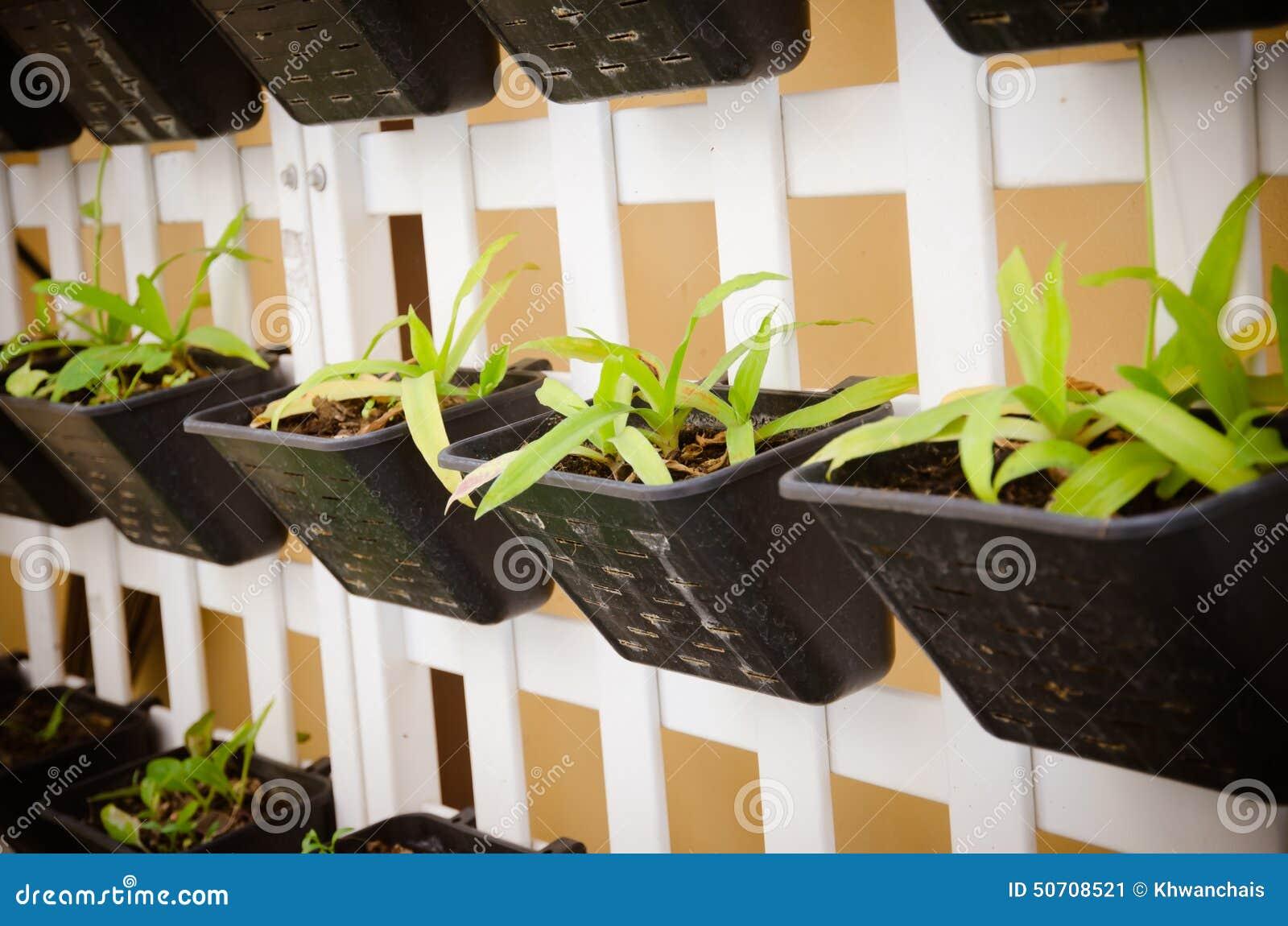 Parete delle piante da vaso fotografia stock immagine - Piante da parete ...