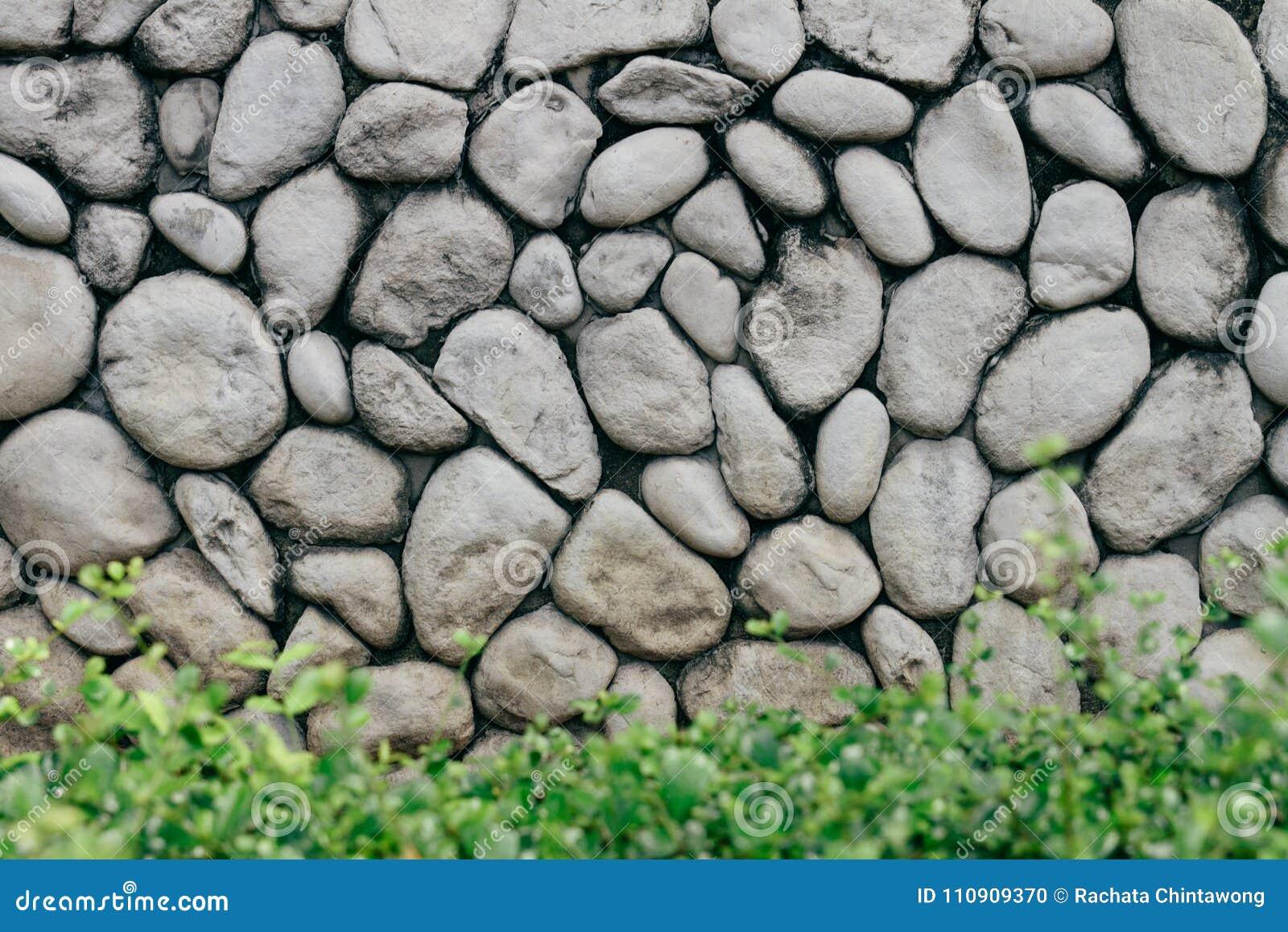 Parete di pietra grigia o grigia con la pietra rotonda di struttura naturale con il cespuglio basso nella parte anteriore Parete