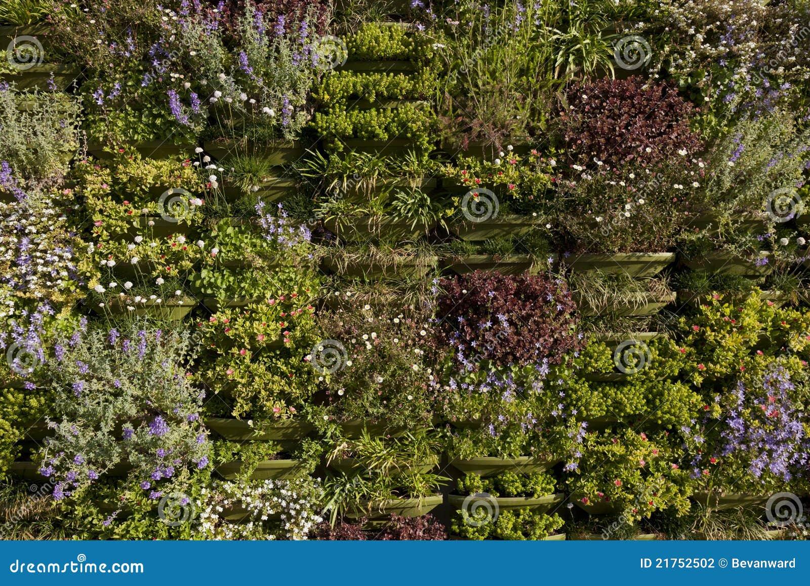 Parete Verde O Primo Piano Verticale Del Giardino Fotografia Stock - Immagine: 21752502