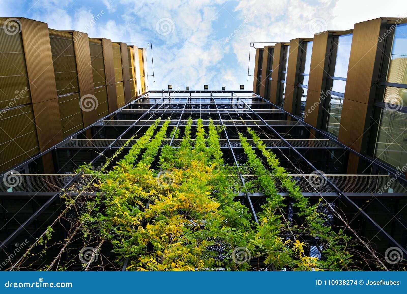 Piante Per Giardini Moderni parete vivente verde all'aperto, giardino verticale sull