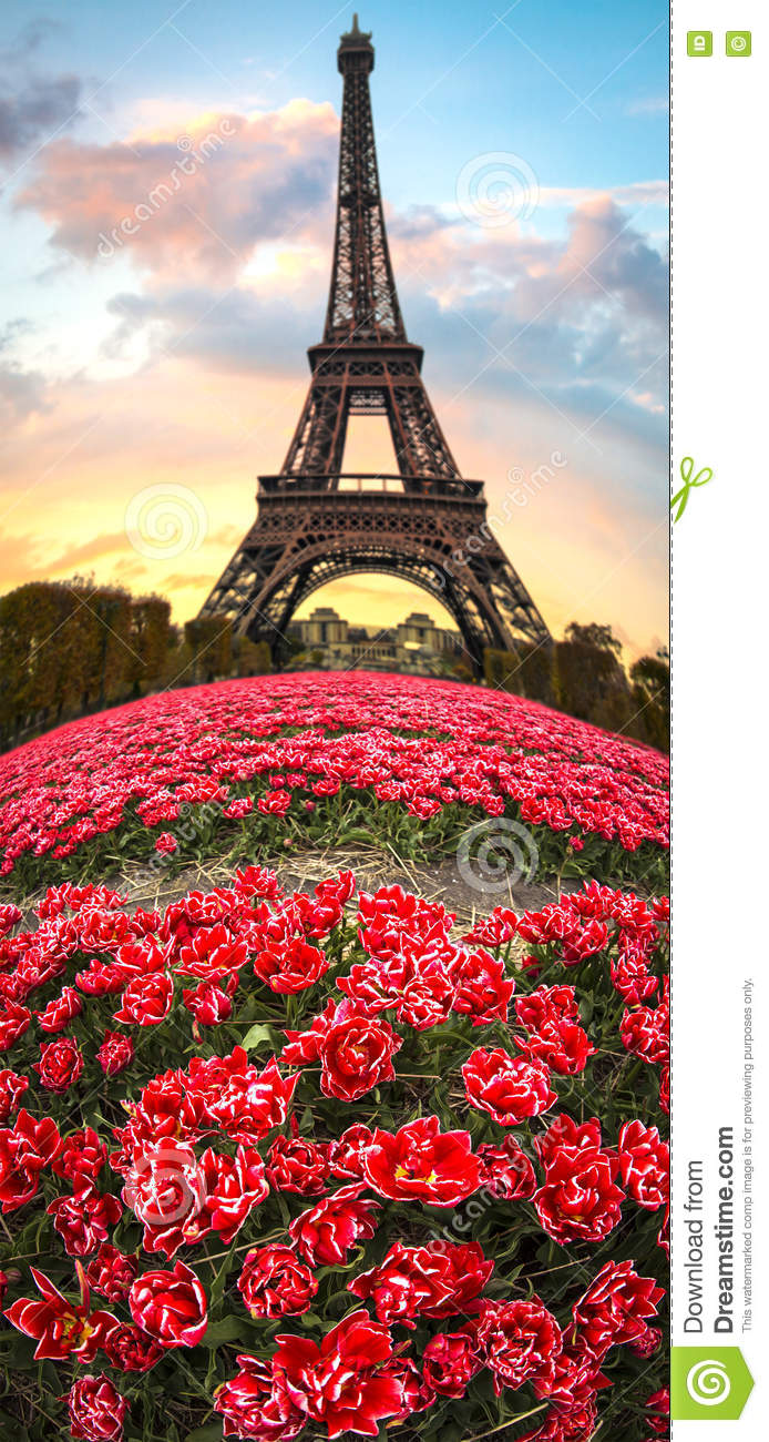paris flowers and eiffel tower stock photo image 77641507. Black Bedroom Furniture Sets. Home Design Ideas