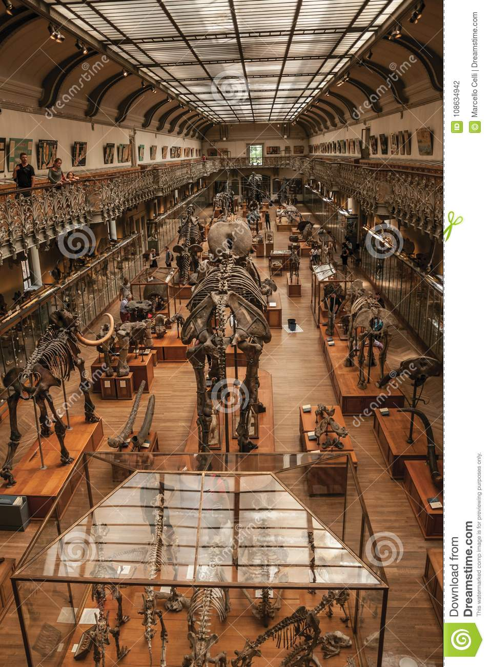 Prehistoric Skeletons And Fossils At Gallery Of Paleontology And
