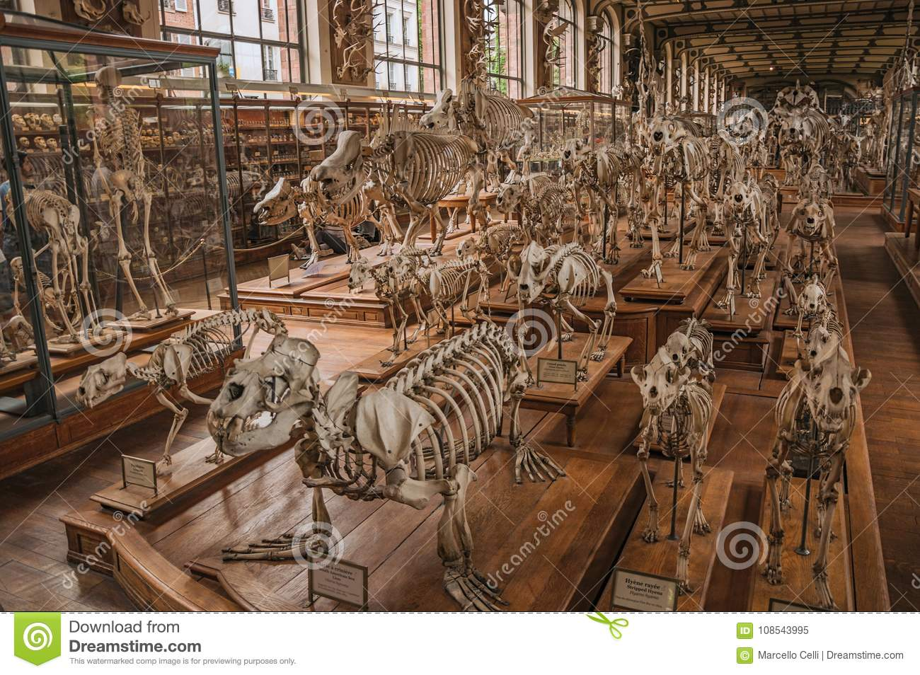 Skeletons Of Animals In The Huge Hall In Gallery Of Paleontology And