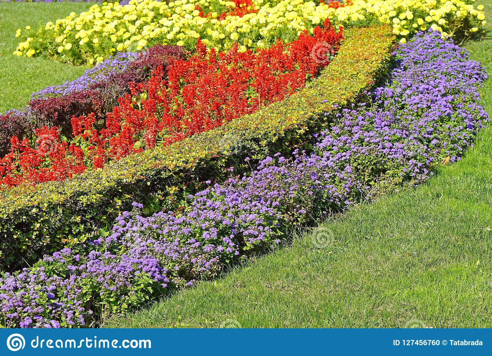 Park Stock Photo Image Of Flower Park Cultivated 127456760