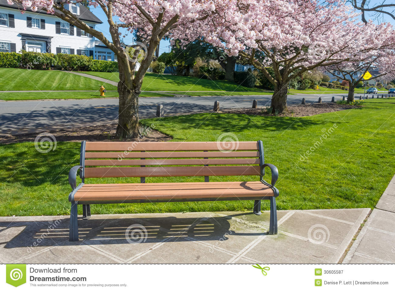 Park Bench Cherry Trees Residential Street Stock Image Image Of
