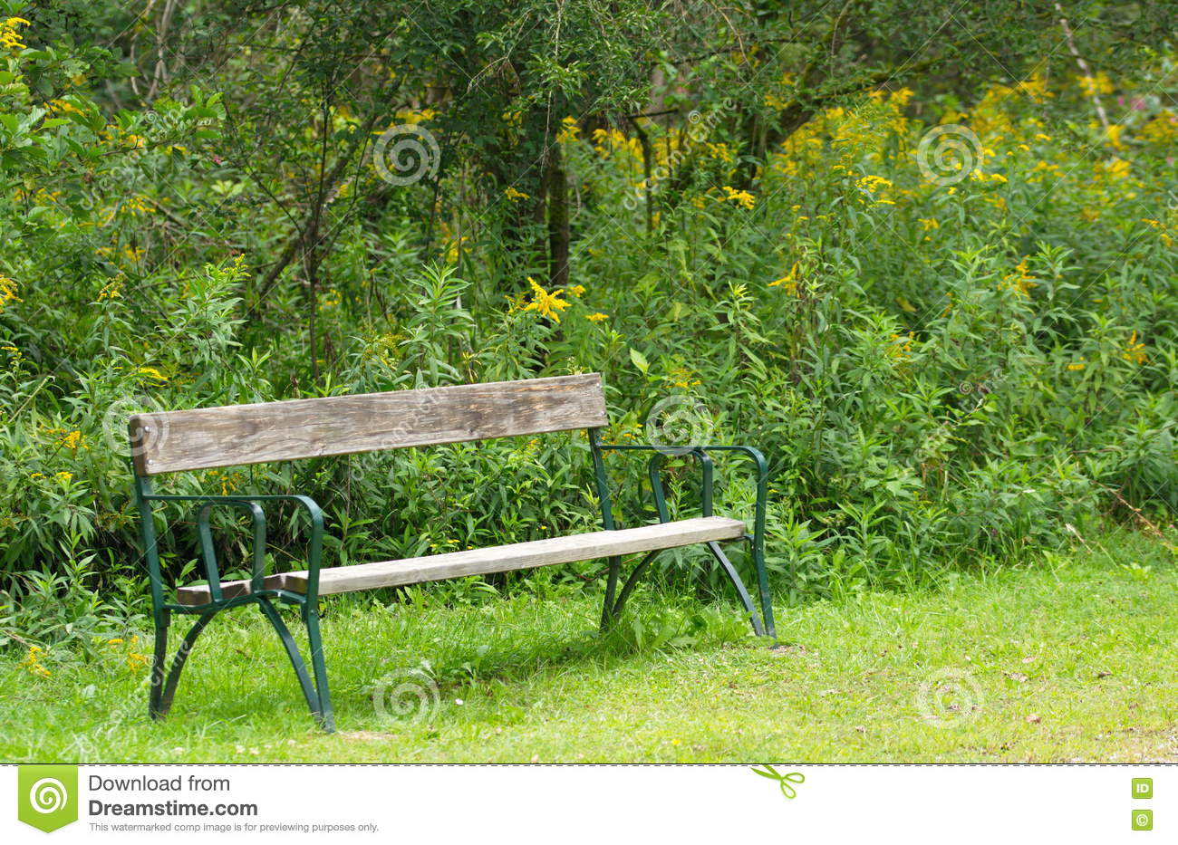 Park Bench In The Nature Stock Photo