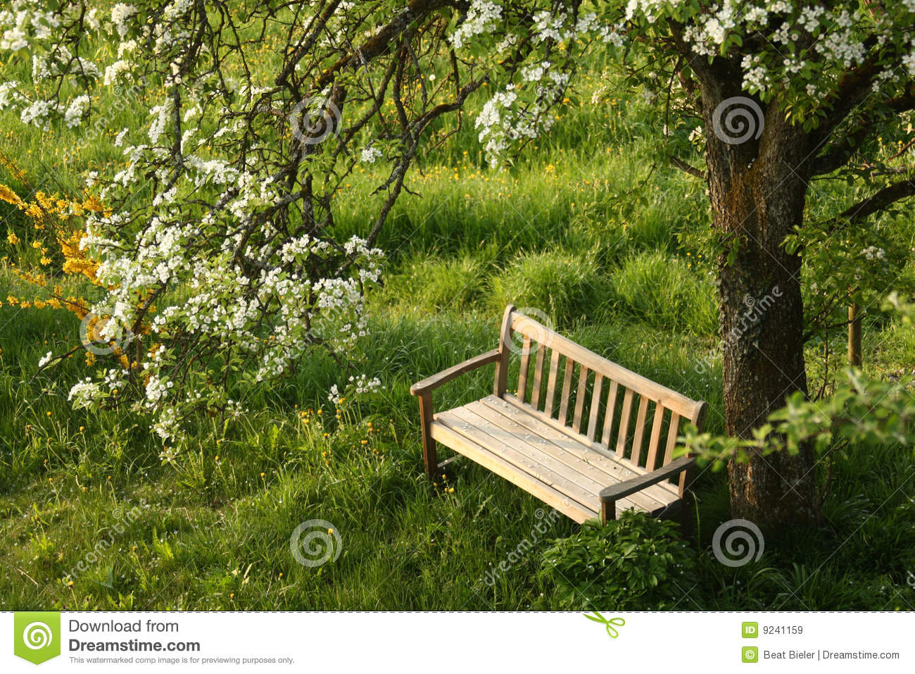 Park bench under blossoming tree