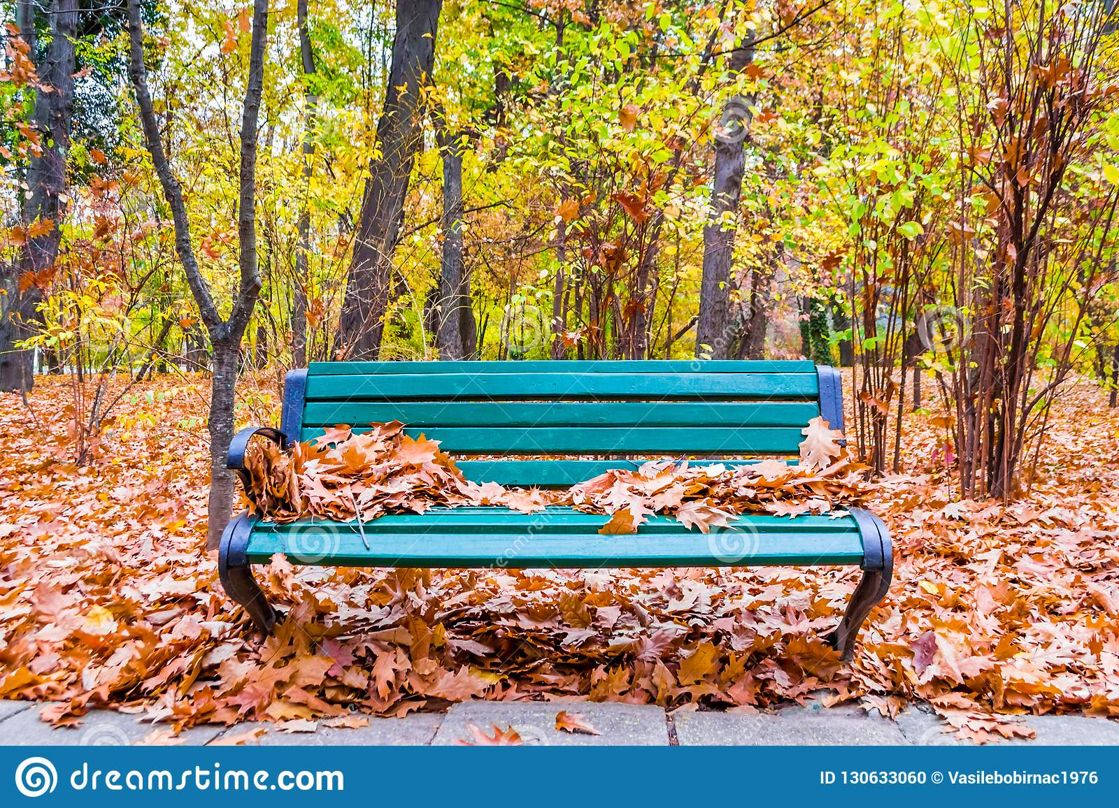 Park Bench Under Fall Cover Stock Photo Image Of Scenic Green 130633060
