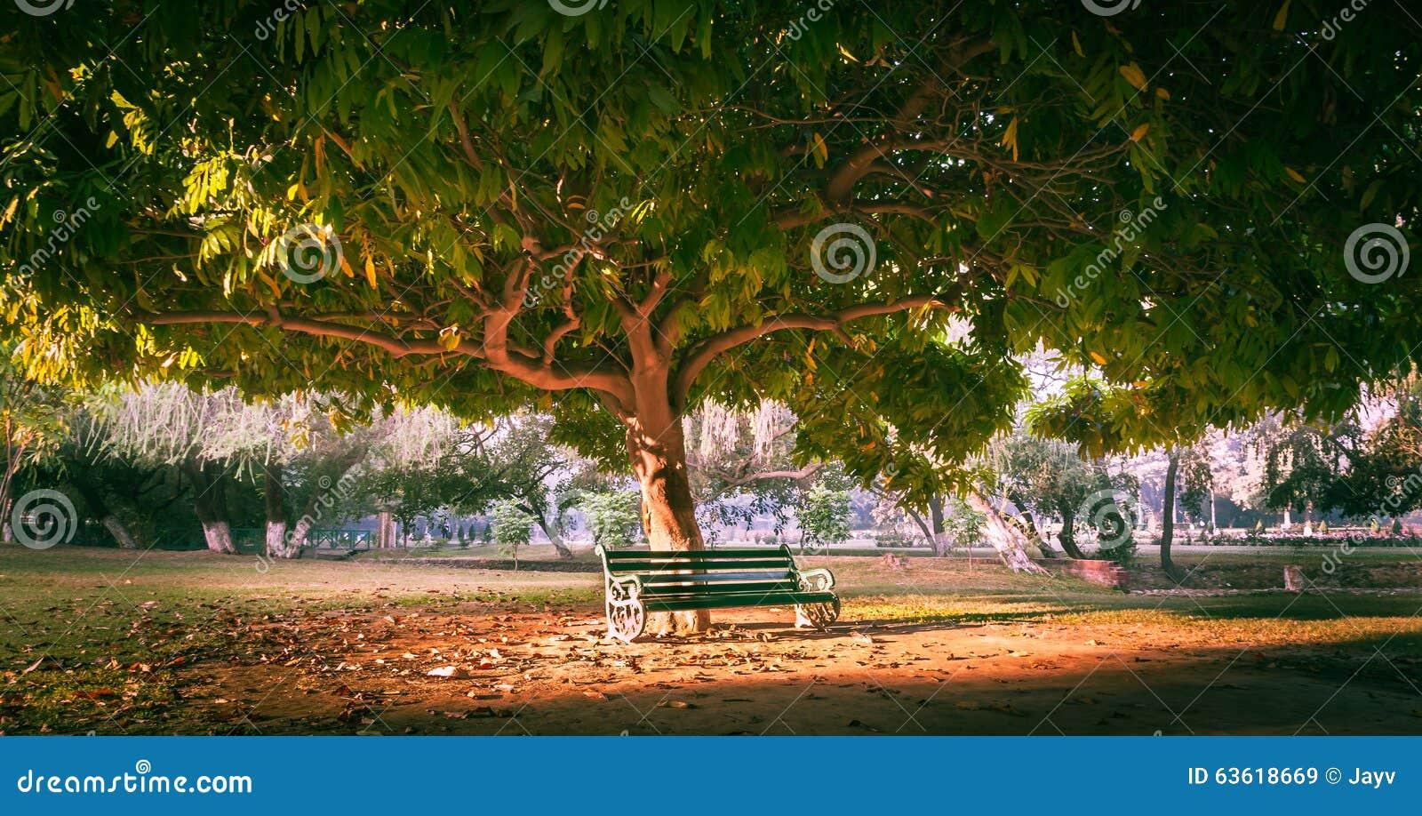 Park Bench Under Tree Stock Photo - Image: 63618669