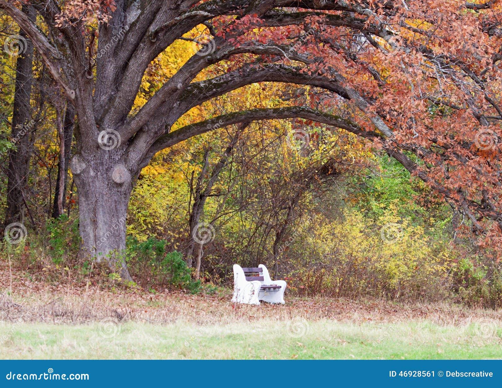Park Bench under a tree stock image. Image of landscape ...