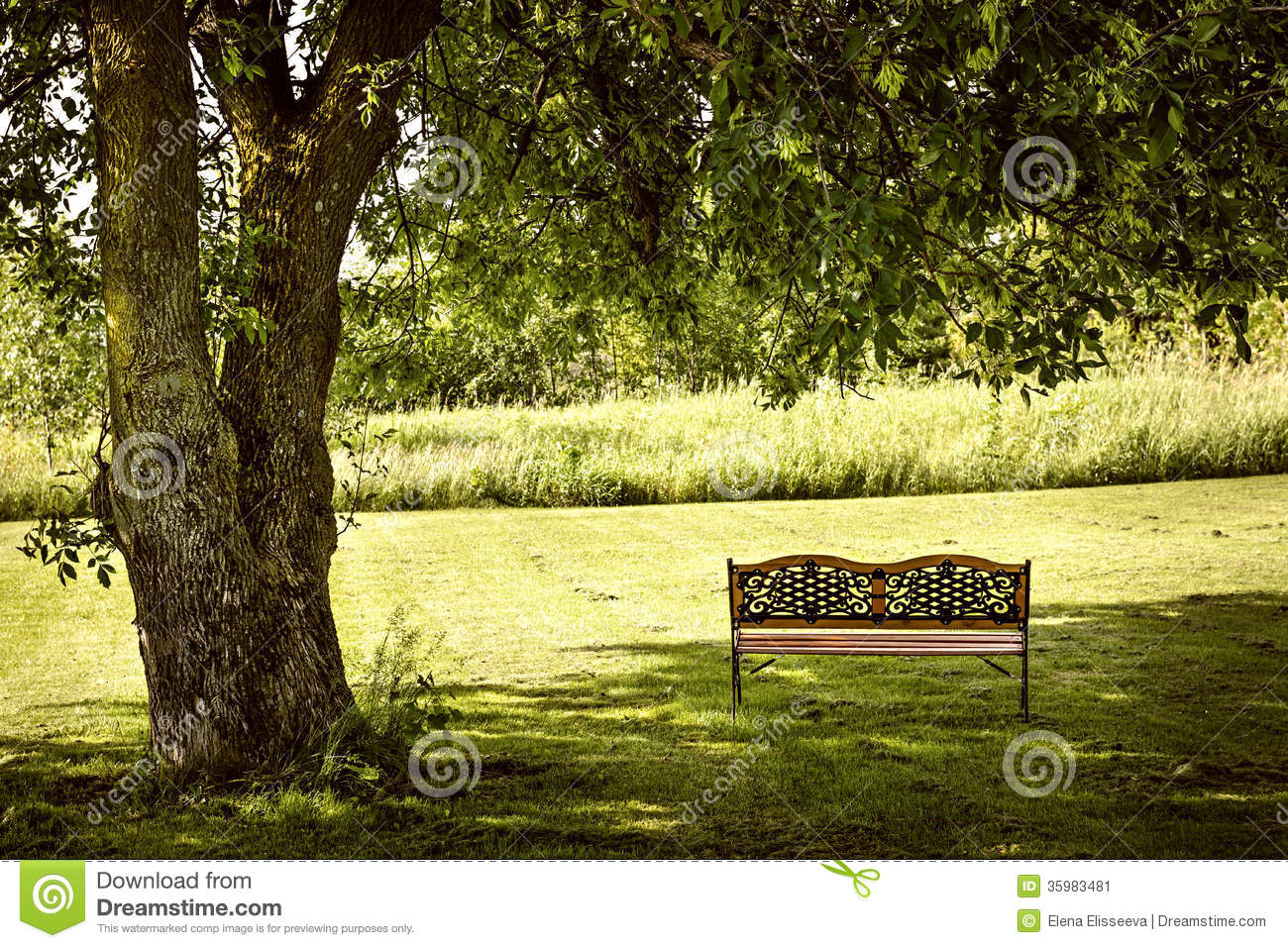 Park Bench Under Tree Stock Image - Image: 35983481