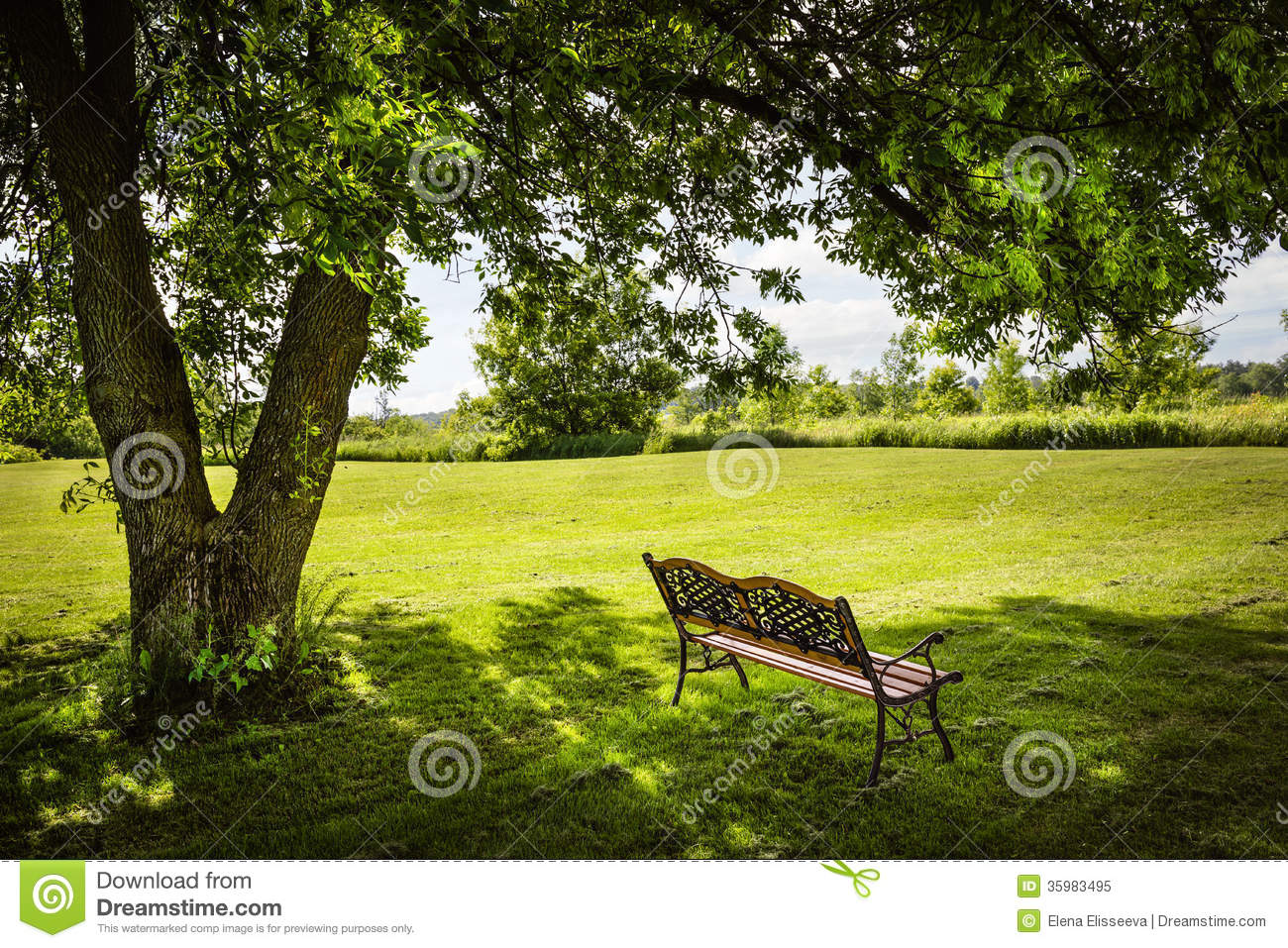Park Bench Under Tree Royalty Free Stock Photo - Image: 35983495