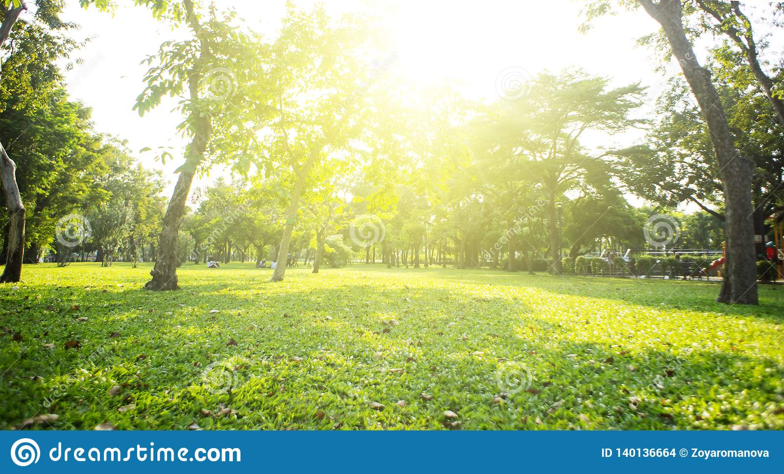 Park With Bright Grass And Trees Sun Glare Relaxing Fitness Background Spring Summer Wallpaper Low Angle Stock Photo Image Of Sunlight Natural 140136664