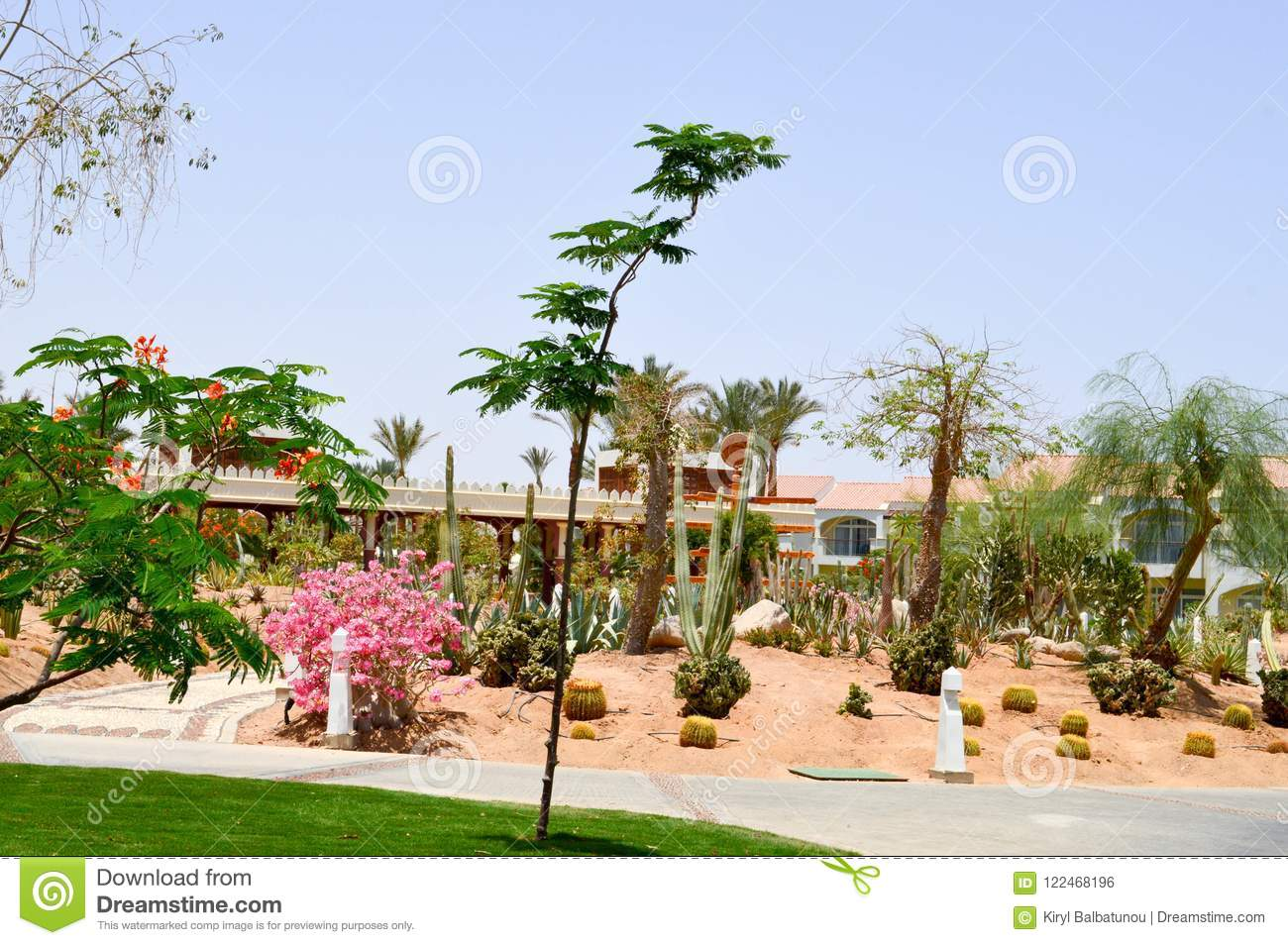 Park with cactus exotic tropical desert against white stone buildings in Mexican Latin American style against the blue sky