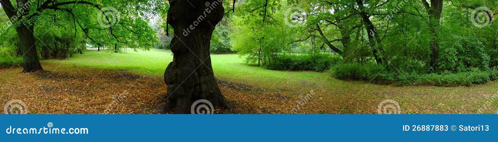 Park in de herfsttijd
