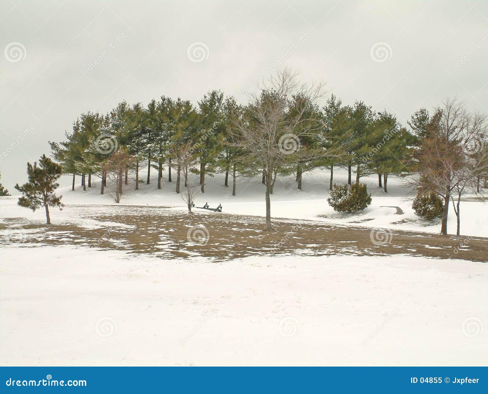 Park in de sneeuw