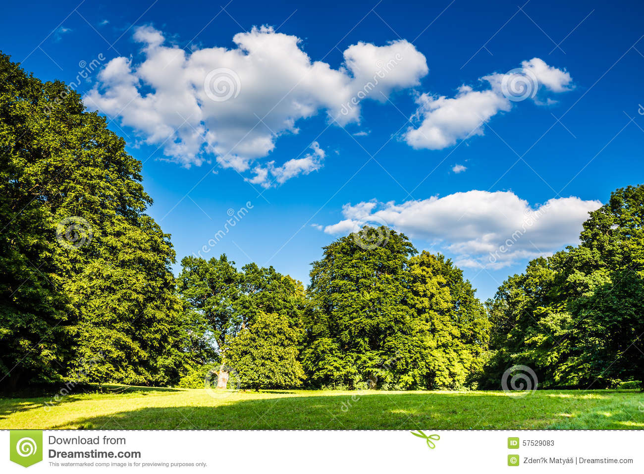 Park With Green Grass, Trees And Deep Blue Sky Stock Photo ...