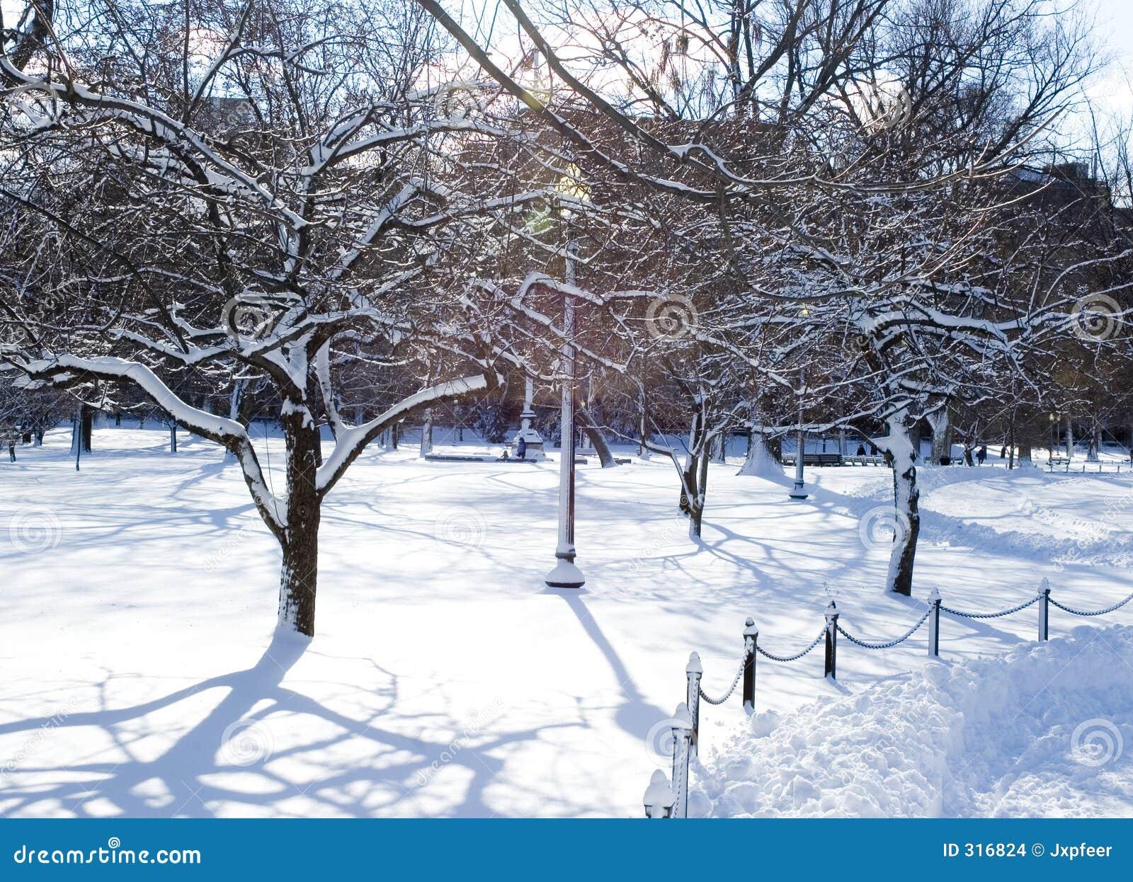 Park lodowaci drzewa