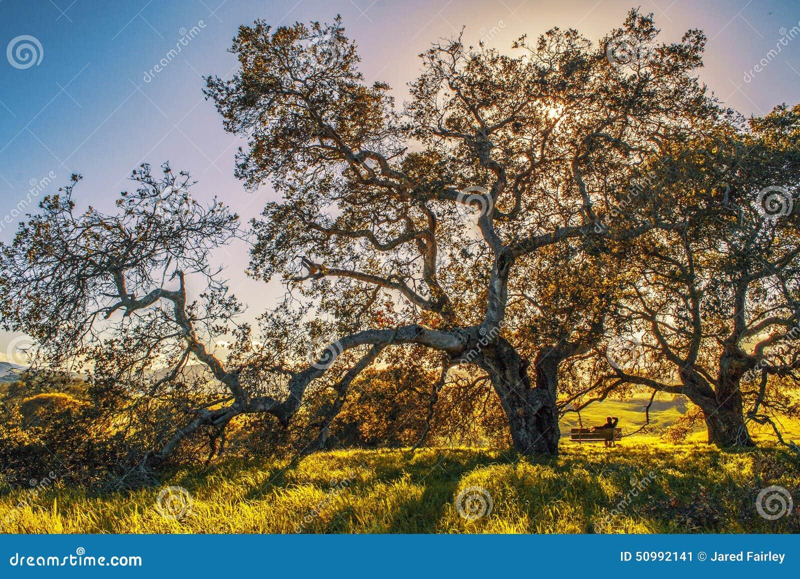 Park in Nord-Kalifornien