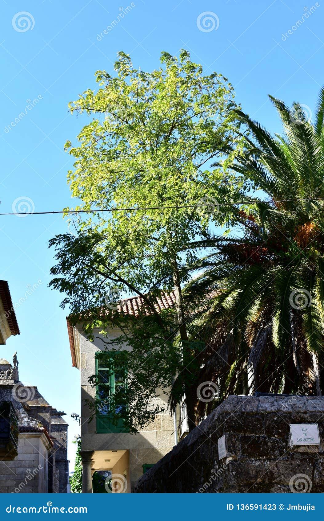 Park z drzewami i domami (Moutohora) Niebieskie niebo, słoneczny dzień Pontevedra, stary miasteczko, Hiszpania
