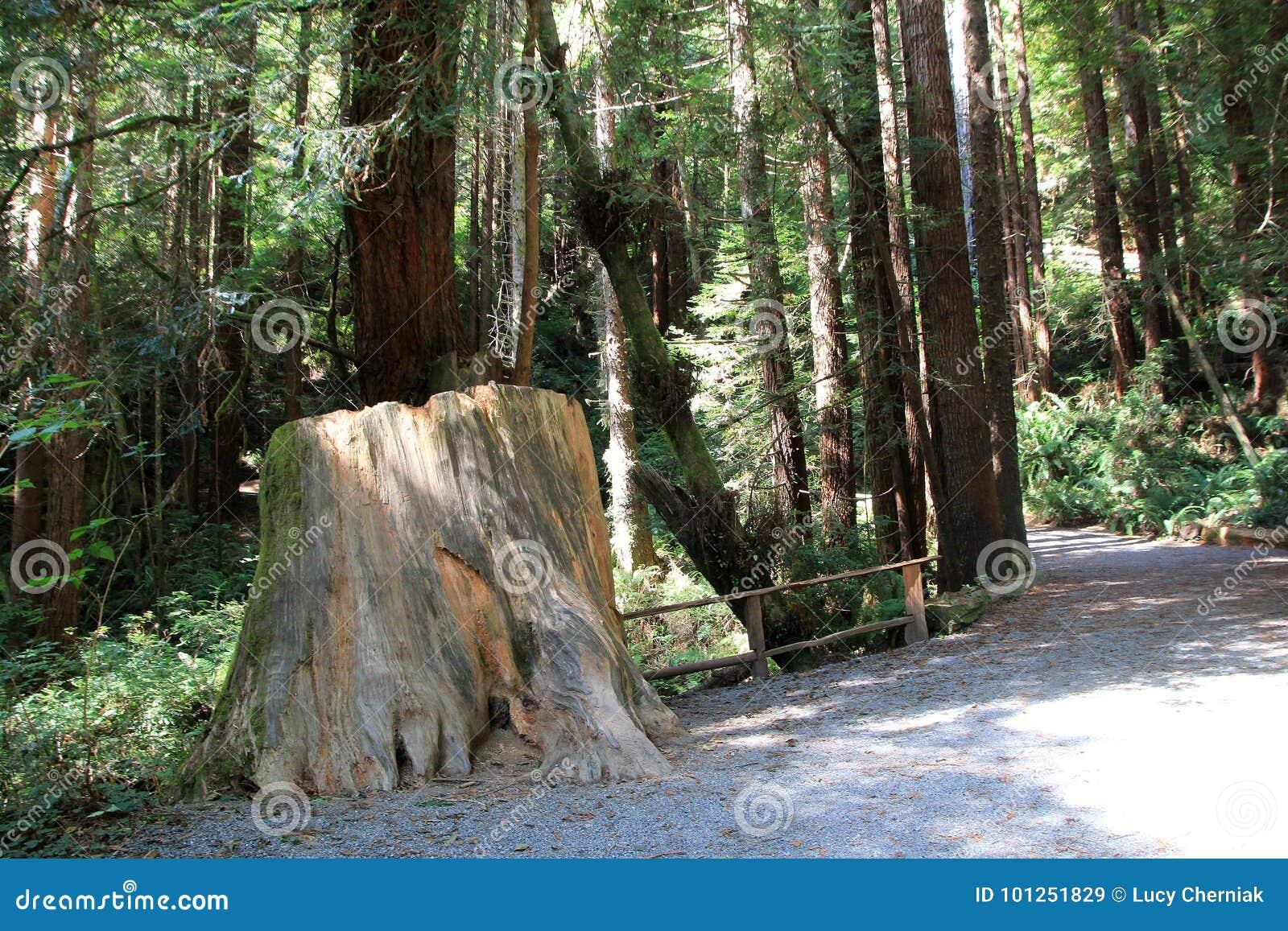 Parkbomen van Geheimzinnigheid