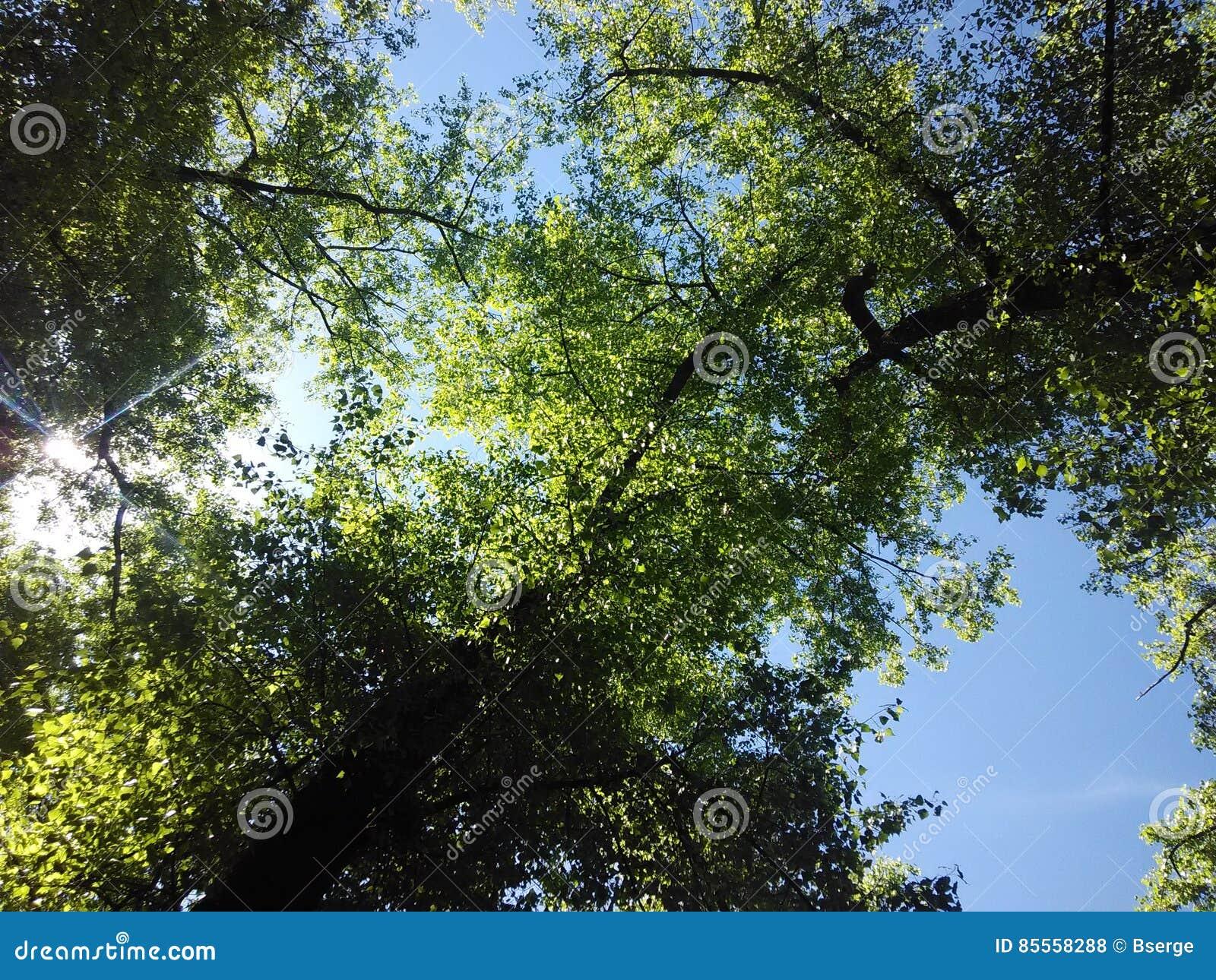 Parken Sie Bäume