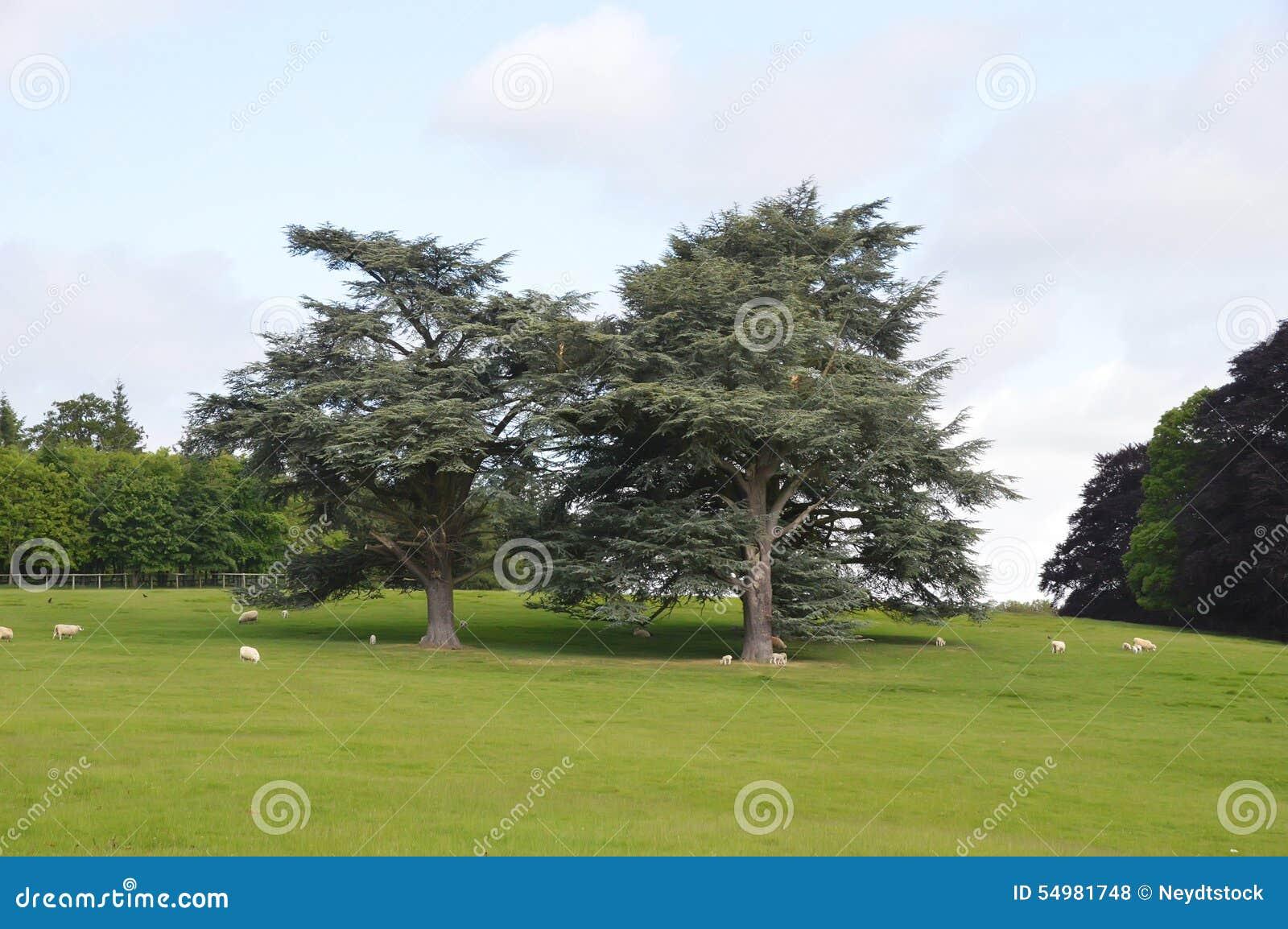 Parkera i Blenheim i det oxfordshire området - Wales