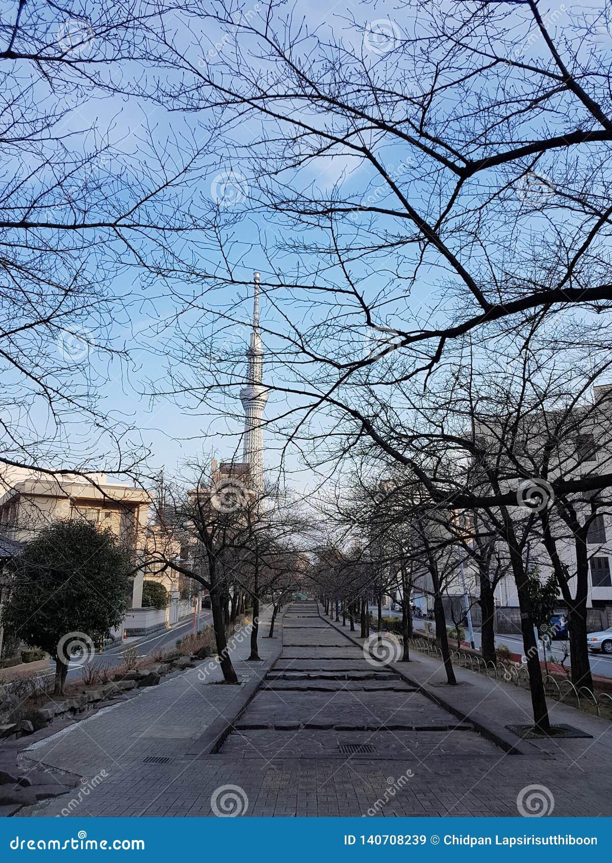 Parki w jesieni Tam są drzewem bez liści I może widzieć Tokio nieba Drzewnego budynek W Japan
