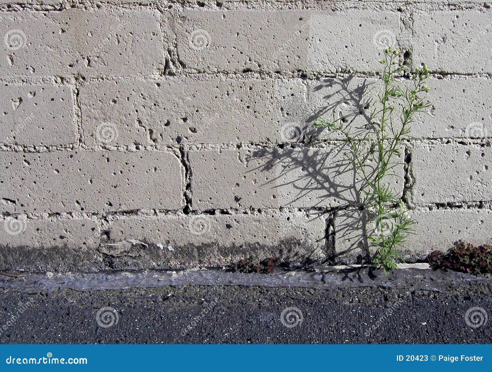 Parking Weed