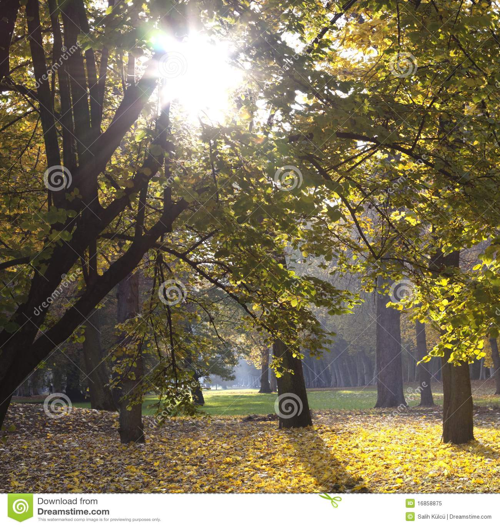 Parque com as árvores no outono