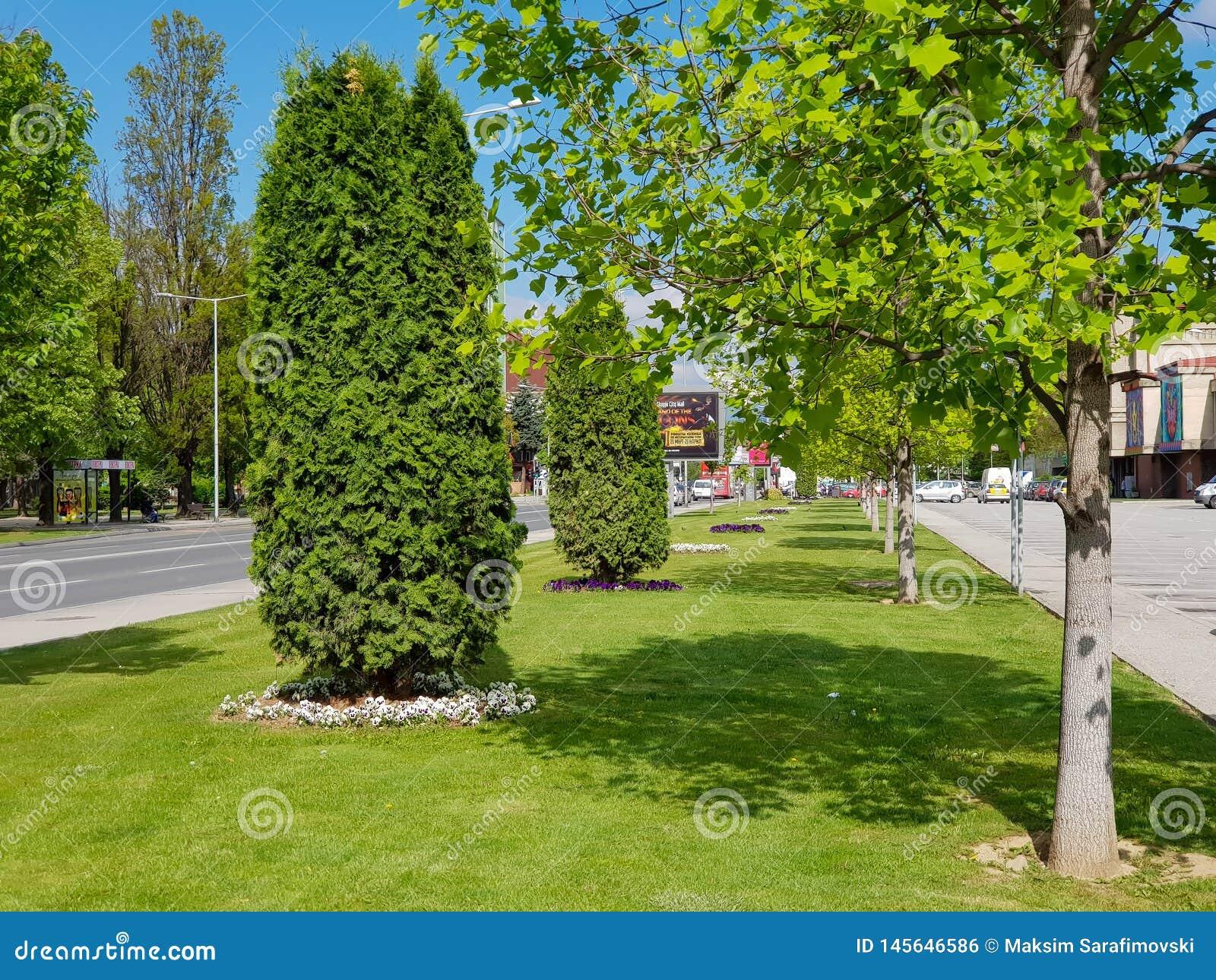 Parque con el árbol verde e hierba para el fondo y el primero plano