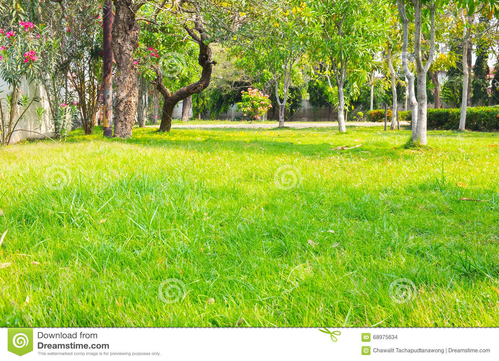 Parque con la hierba verde y los árboles