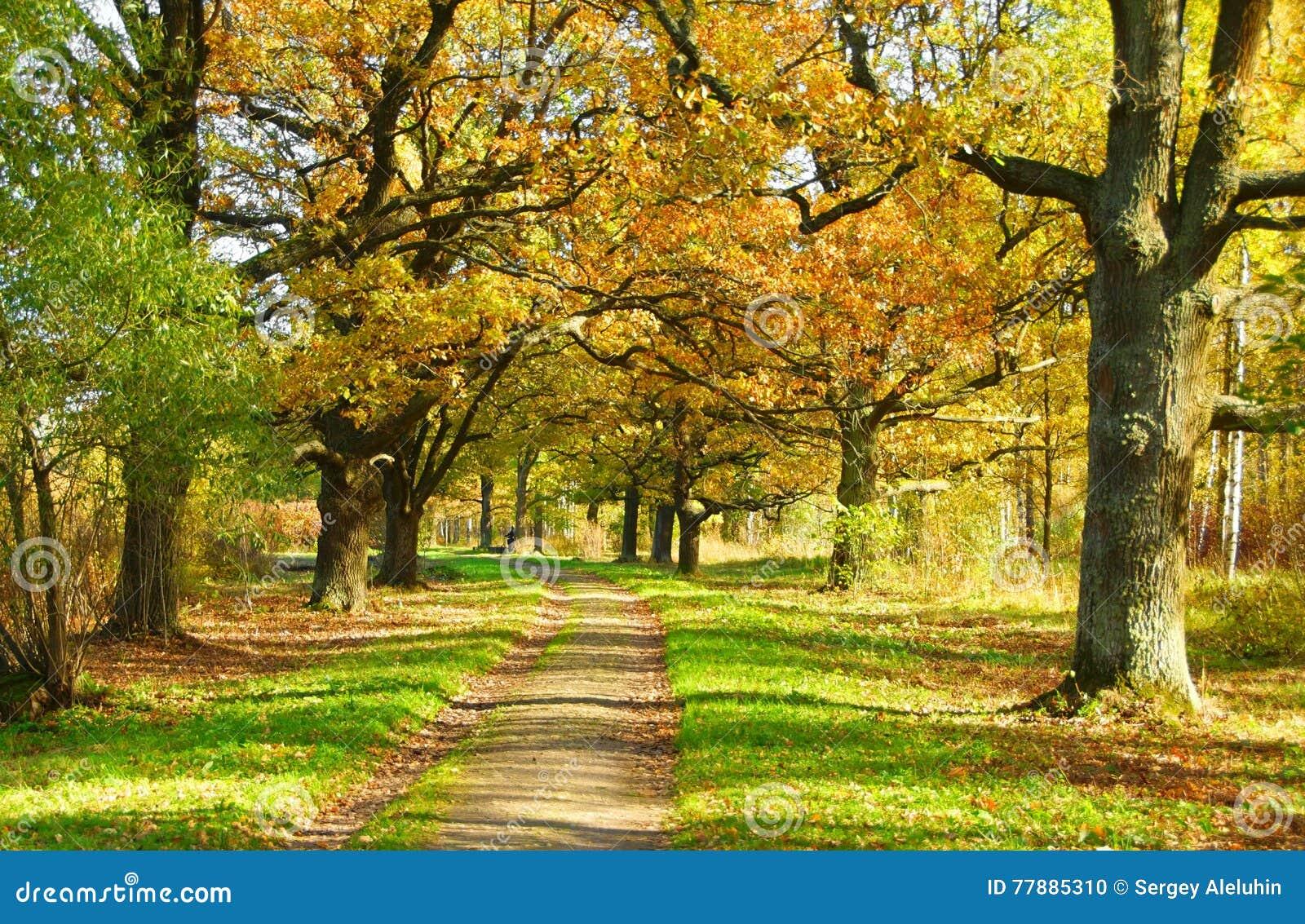 Parque De Babolovskiy En Tsarskoye Selo Foto de archivo
