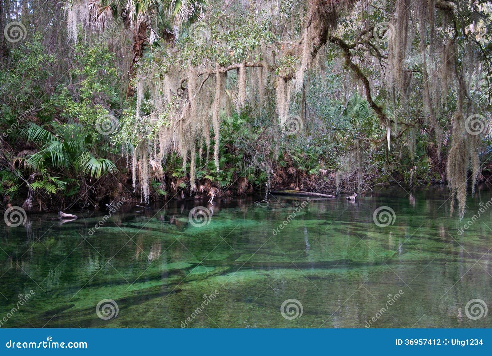 Parque de estado azul de la primavera, la Florida, los E.E.U.U.