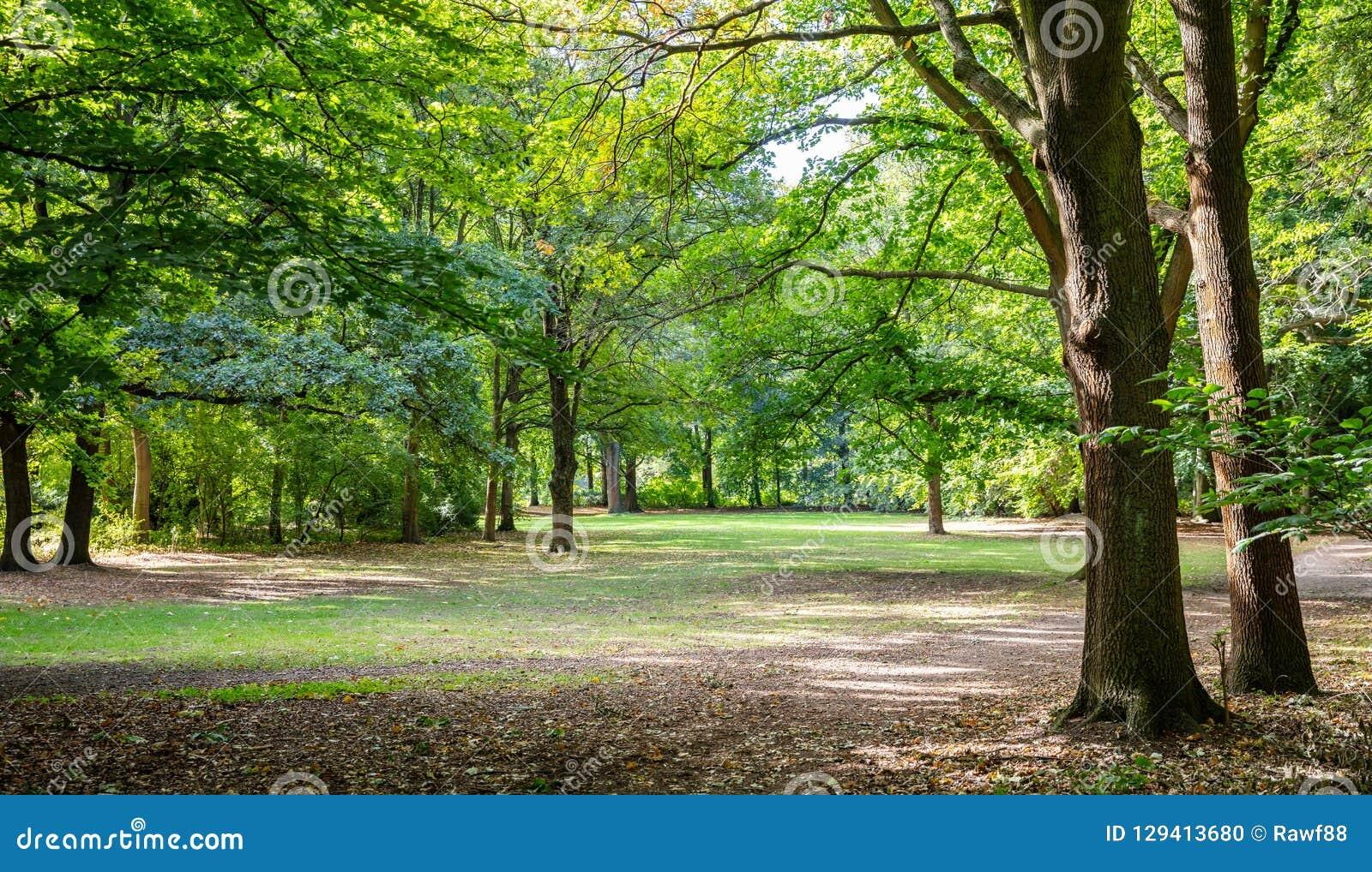Parque de la ciudad de Tiergarten en Berlín, Alemania Vista del campo y de los árboles de hierba