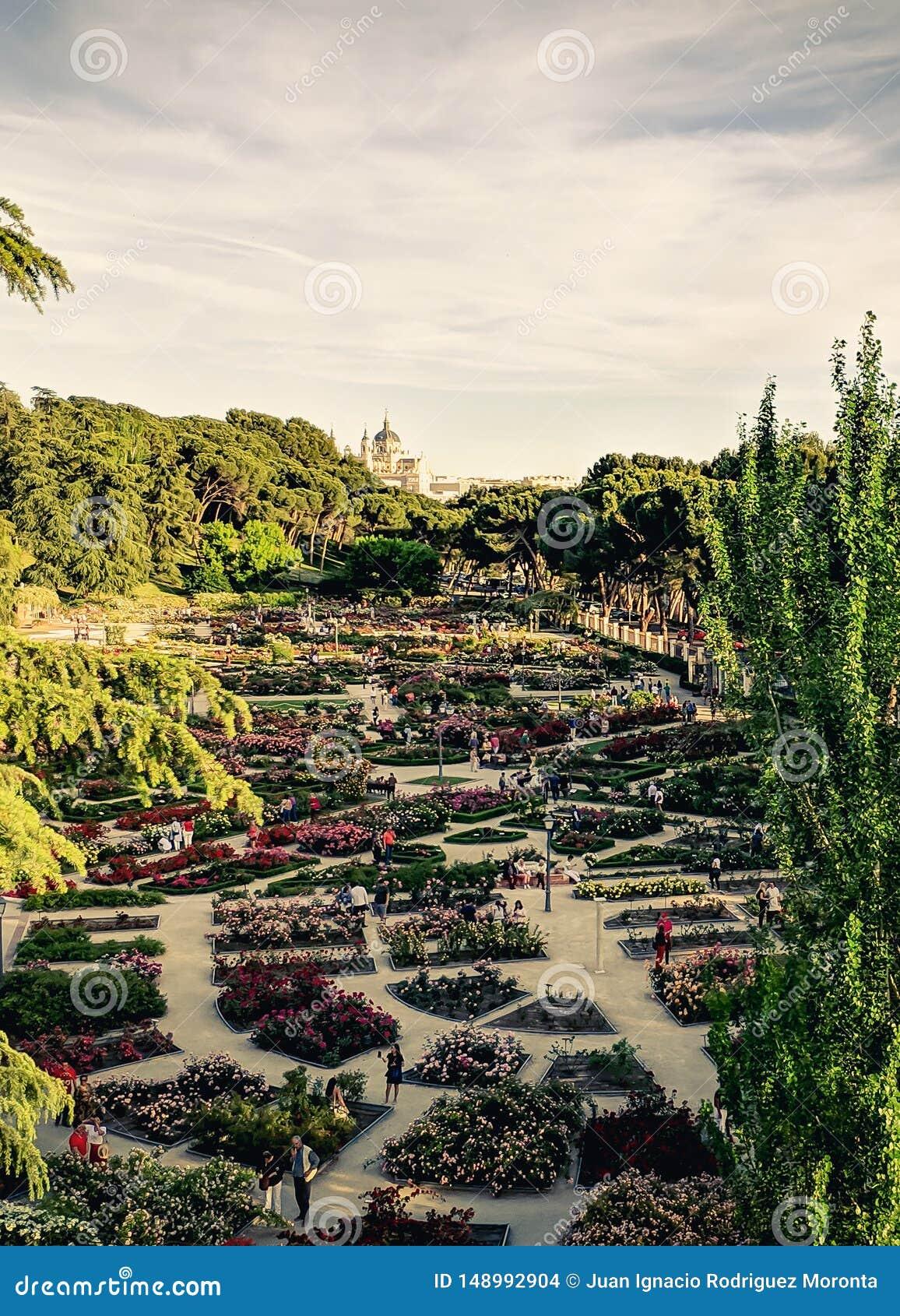 Parque de la rosaleda con el palacio real de Madrid