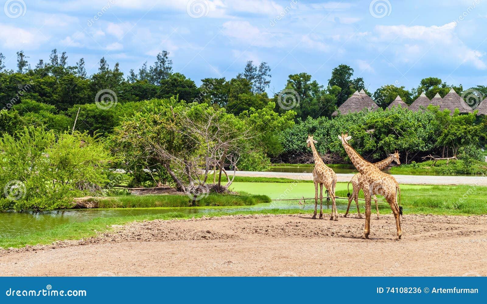Parque de Safari World
