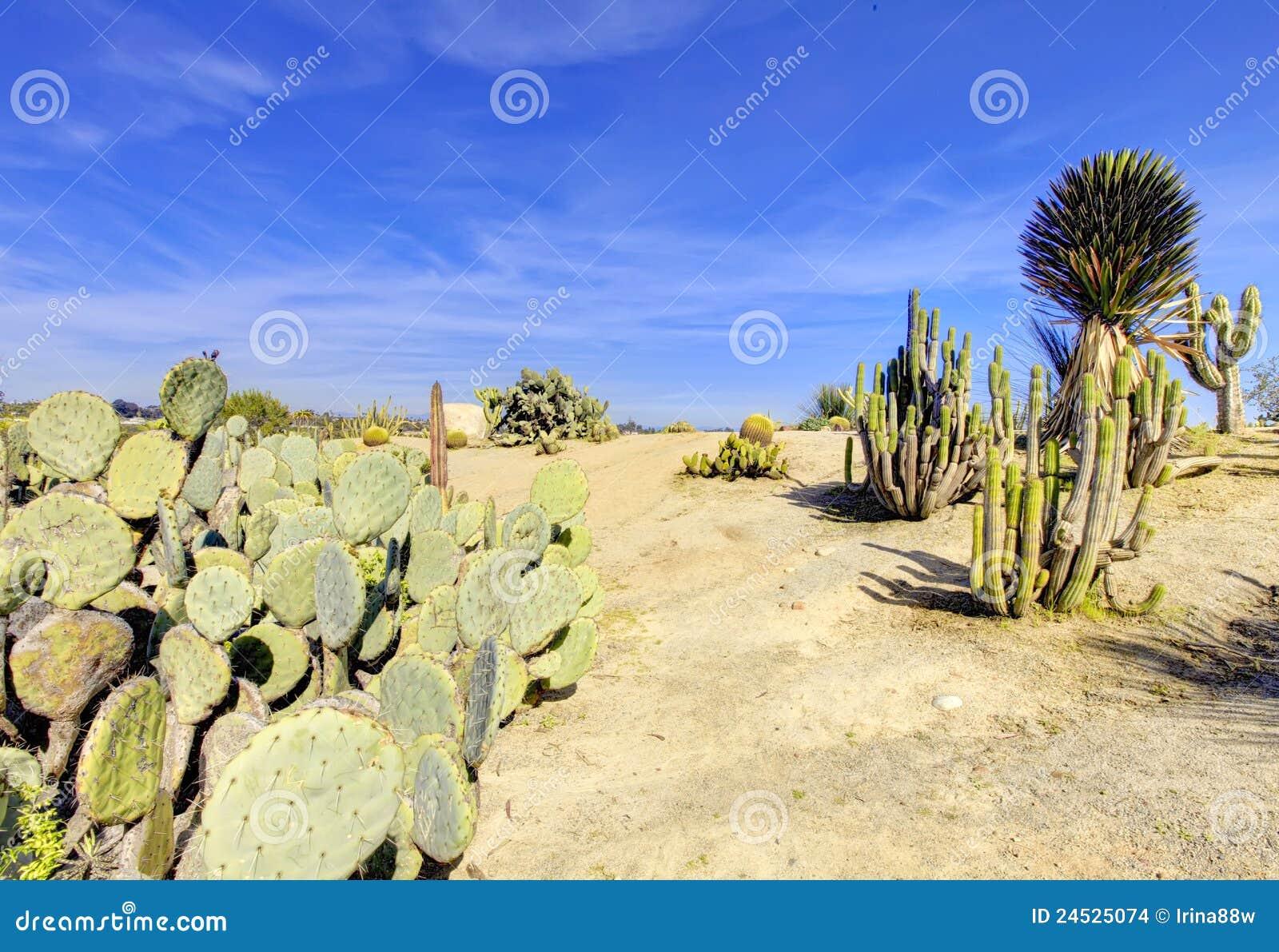 Parque del balboa en San Diego, desierto del cacto.