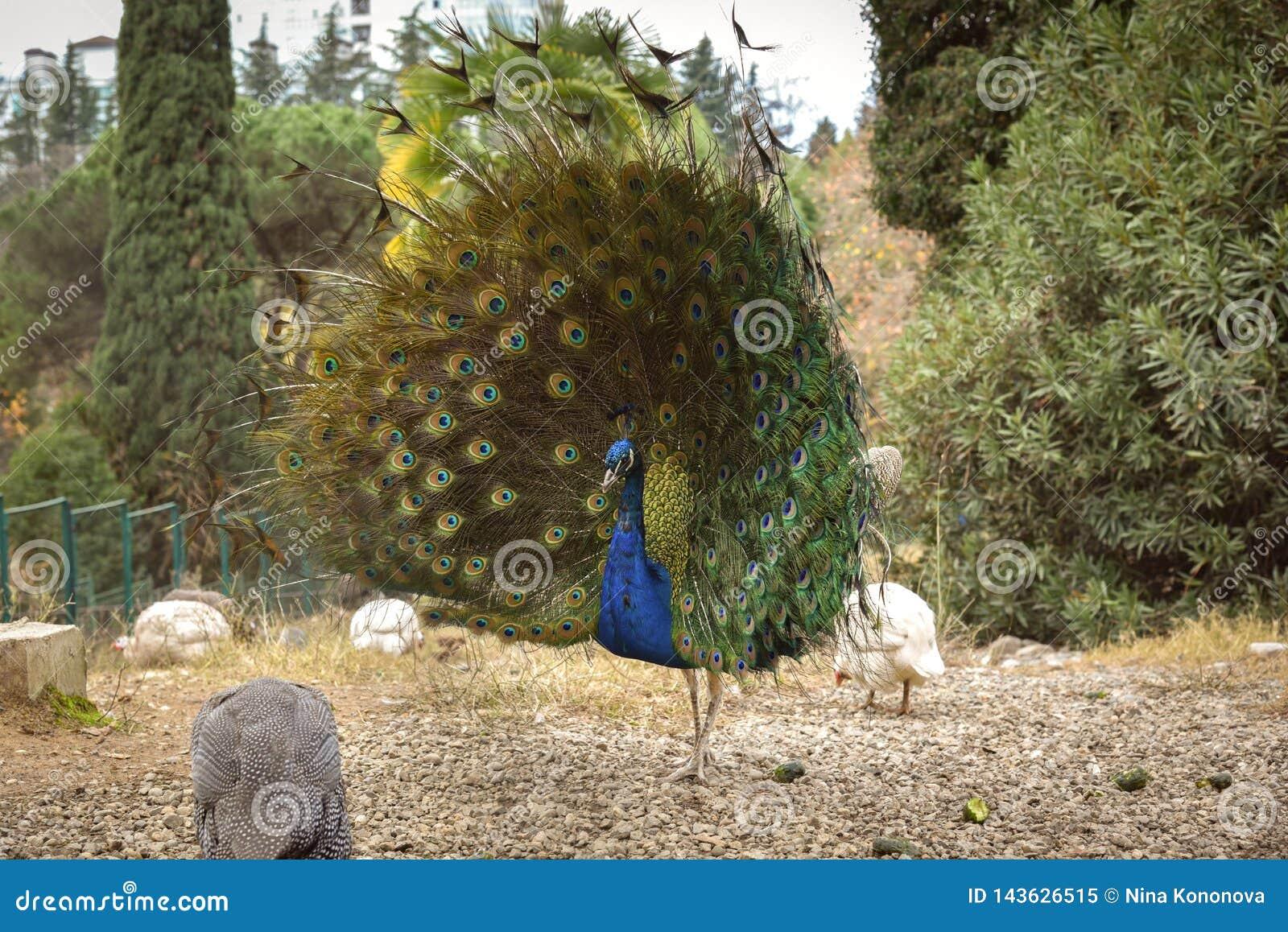 Parque do arboreto arboreto 'de Dendrarium 'do parque da cidade de Sochi, Rússia nave pássaro