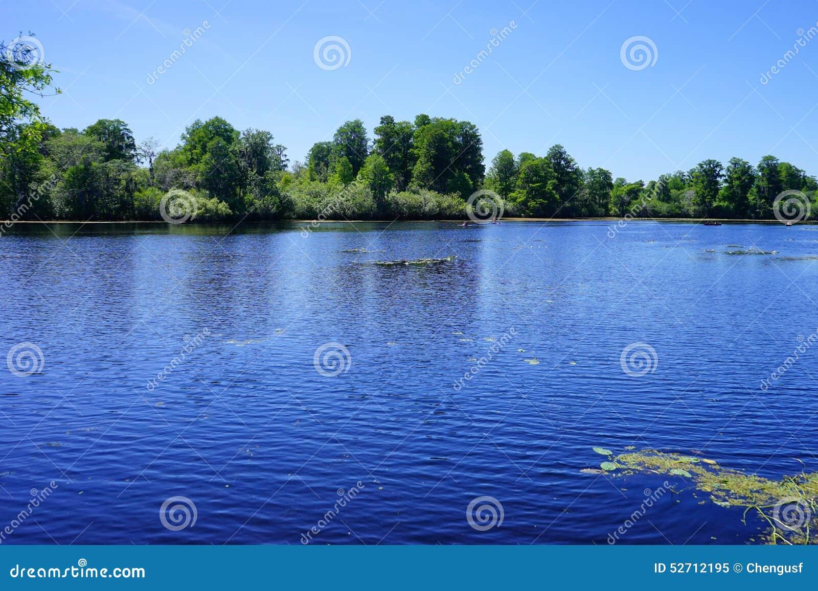 Parque do lago lettuce,