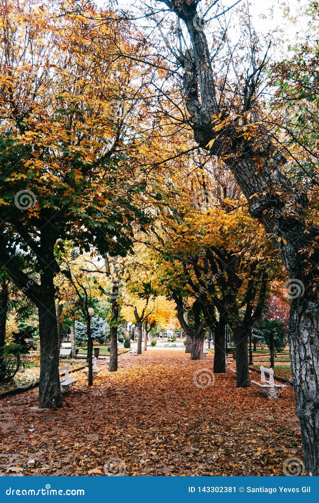 Parque do outono com árvores douradas