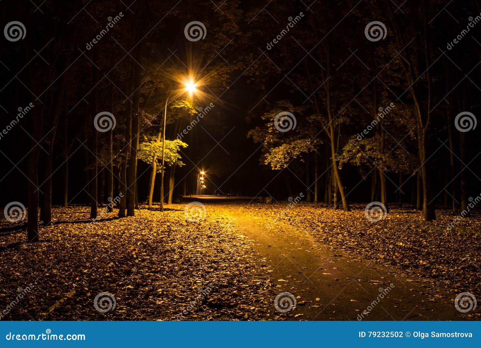 Parque do outono na noite Luzes de incandescência Estrada com folhas de outono