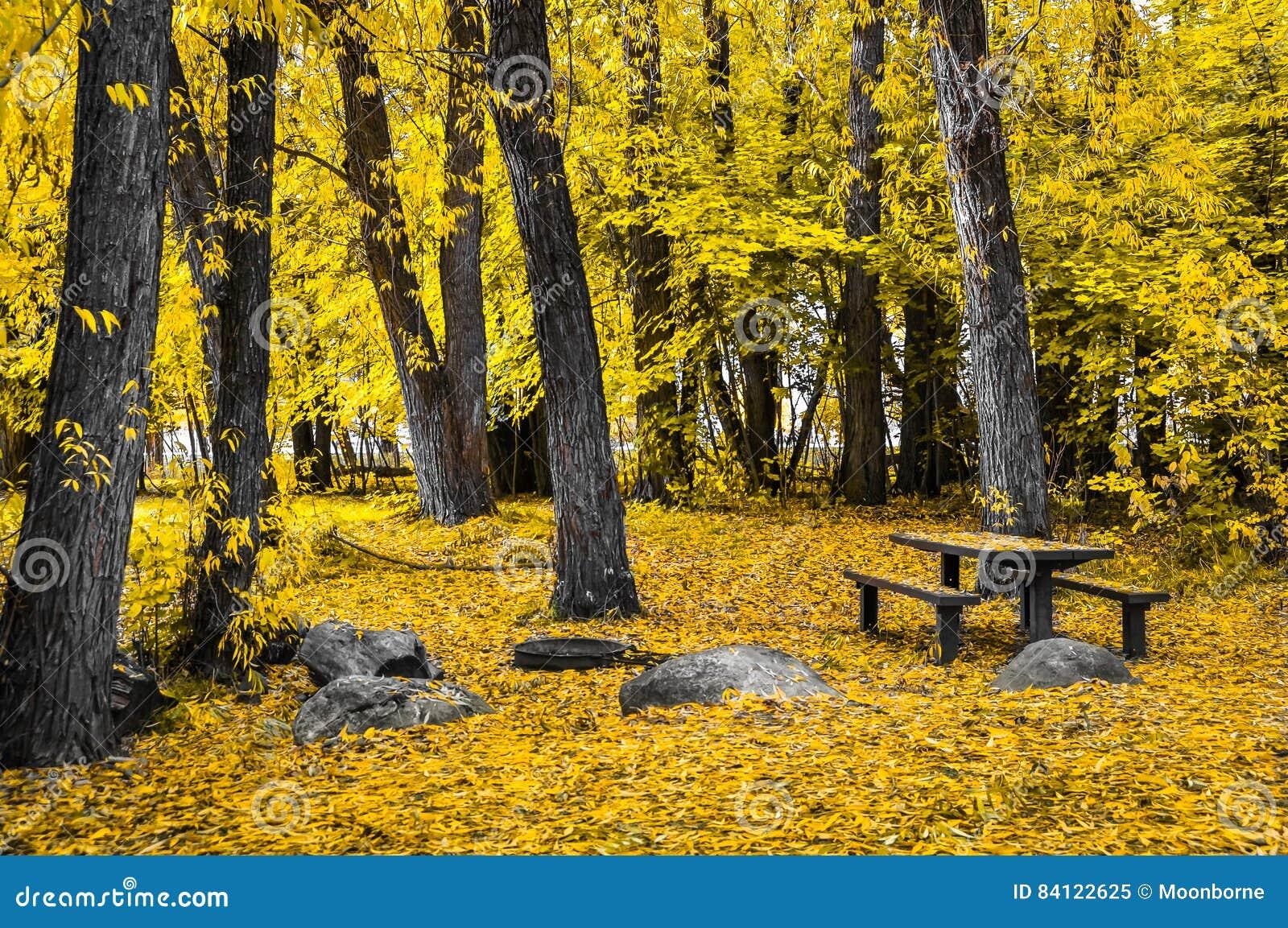 Parque dourado