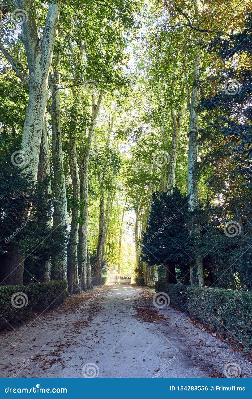Parque el palacio de Fontainebleau en la luz del día