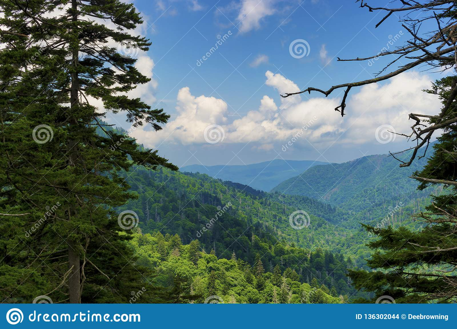 Parque nacional de Great Smoky Mountains en verano