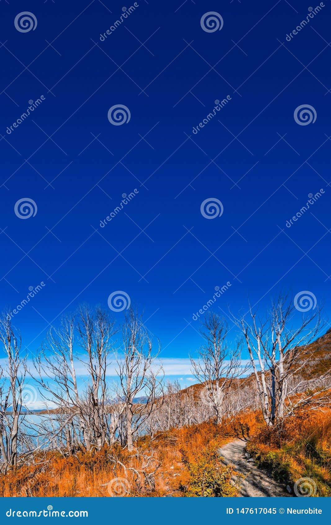 Parque nacional de Torres del Paine, suas florestas no outono dourado e céu azul, Patagonia, o Chile