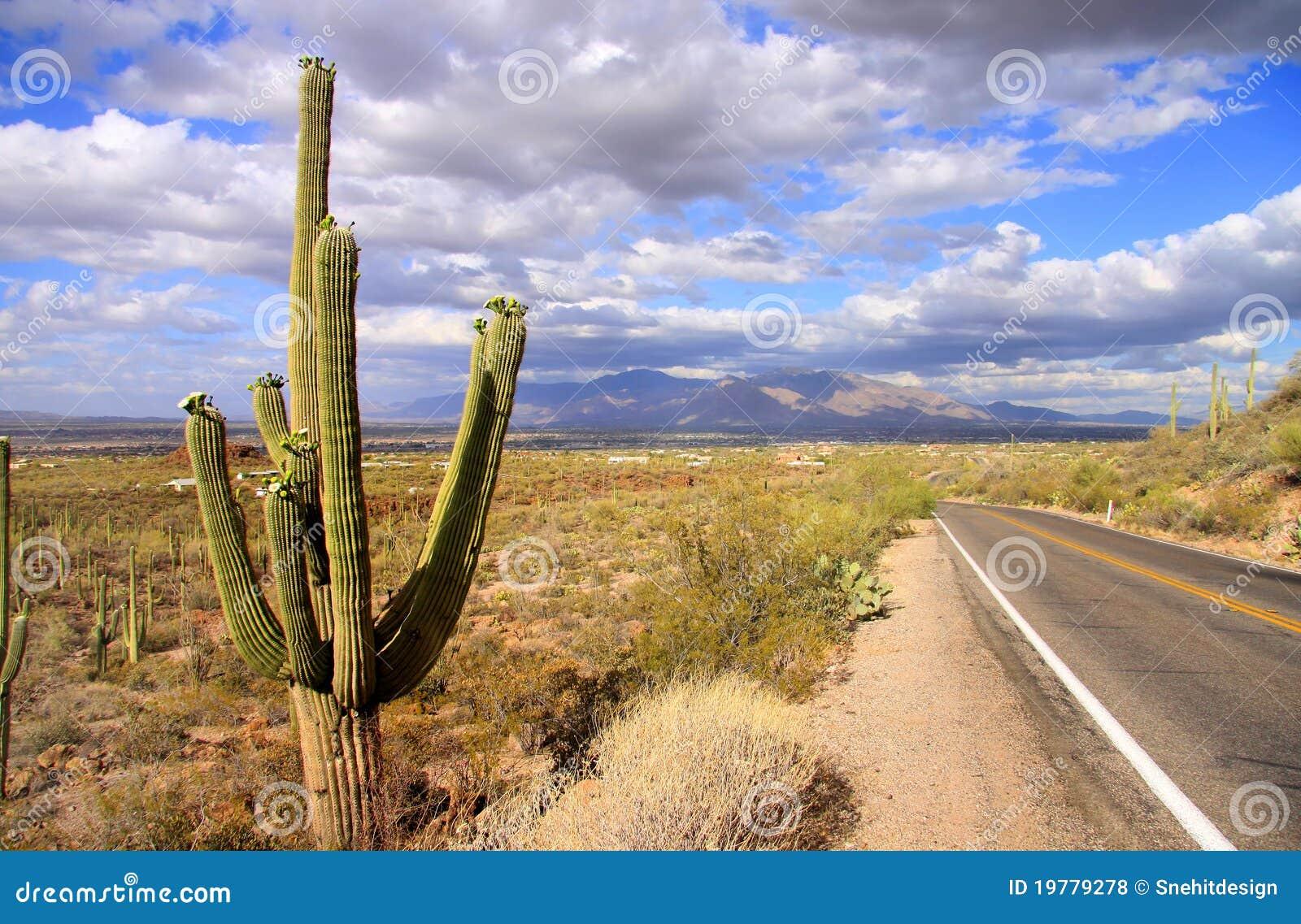 Parque nacional del Saguaro